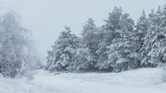 Fir trees Christmas in snow wild forest winter snowing Stock Footage