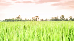 4K Time Lapse Beautiful Sunset On Rice Farm And Colorful Clouds Moving - stock footage