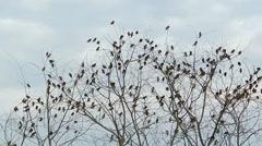 Munia birds in tree Stock Footage