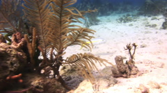 Underwater Coral Reef and Tropical Fish in Bahamas Stock Footage