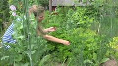 Woman gather green fresh parsley in eco garden in summertime. 4K Stock Footage