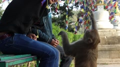 Two Nepalese play with the monkey in the background of stupa Stock Footage