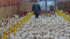 Farm of Turkeys Birds Stock Footage
