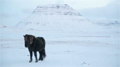 Black Icelandic horse in front of Kirkjufell mountain winter snowy Iceland Stock Footage