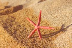 Summer travel vacation, tourist destination,Starfish on the sand beach, Stock Photos