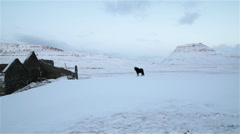 Lone black horse abandoned stone house ruins winter mountains Iceland Stock Footage