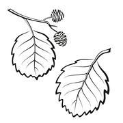 Alder Leaves, Pictogram Set Stock Illustration
