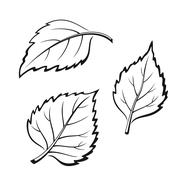 Birch Leaves, Pictogram Set Stock Illustration
