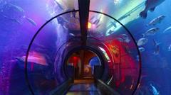 Aquarium Tunnel Stock Footage