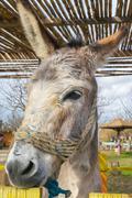 Donkey close up portrait at a park. Stock Photos