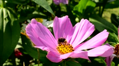 A bee pollinates a flower meadow Stock Footage