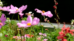 Wildflowers in the meadow with butterflies Arkistovideo