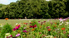 Meadow with flowers near a forest where people go through Stock Footage