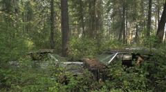 Auto junkyard in the forest, disappearing, wide shot Stock Footage