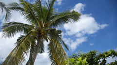 Coconut tree and blue sky with clouds - stock footage
