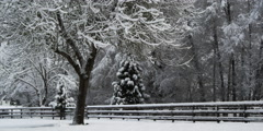 Snow-covered trees on either side of a wooden fence Stock Footage
