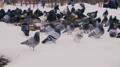 Many pigeons are heated around the heating duct in the background people clean Stock Footage