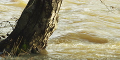Floodwater swirling around a tree trunk - stock footage