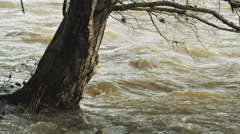Floodwater flowing around a tree - stock footage
