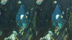 This is a shot of some fish swimming at the albuquerque NM aquarium. Shot on - stock footage