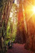 Nature Photographer in the Redwood Forest - stock photo