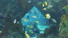 This is a Stereoscopic shot of the Albuquerque Aqarium. Availible in 2D and 3 - stock footage