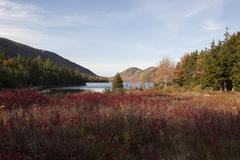 Tranquil pond and mountains, Acadia National Park, Maine, USA Stock Photos