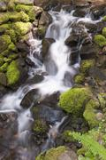 Stock Photo of Water flowing over mossy rocks, Olympic National Park, Washington, USA