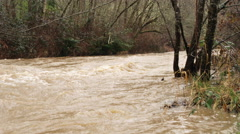A creek in flood overflows its brushy bank in the foreground Stock Footage