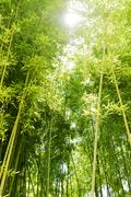 Sunlight shining through bamboo - stock photo