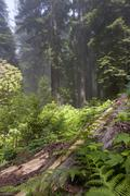 Stock Photo of Forest undergrowth
