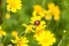 Ladybug and ant - stock photo