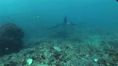 Few giant manta rays (Manta birostris) swimming over reef Stock Footage