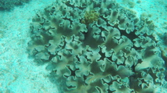 Soft corals in tropical sea Stock Footage