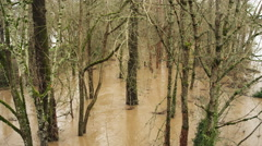 Floodwater flowing among stream-side trees Stock Footage