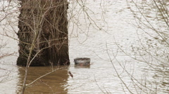 An ashcan floats near the trunk of a tree standing in flowing muddy water Stock Footage