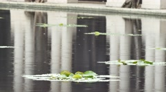 raining on lily pads in a pond Stock Footage