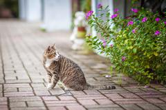Cat on street Stock Photos