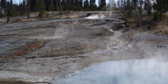 Elk near steaming hot springs at Yellowstone National Park in Wyoming Stock Footage