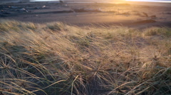 Sand dunes and native spinifex grass at sunset on sandy beach Stock Footage