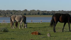 Horses spring Stock Footage