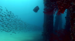 Massive school of fishes in Candidasa jetty - stock footage