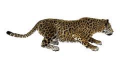 Big Cat Jaguar Stock Illustration