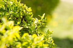 Sunny abstract green nature background, selective focus Stock Photos