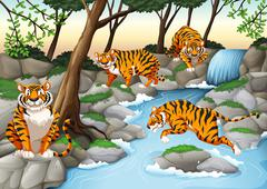 Four tigers living by the river - stock illustration