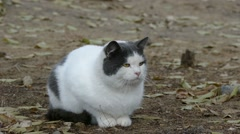 Fat cat on the street Stock Footage
