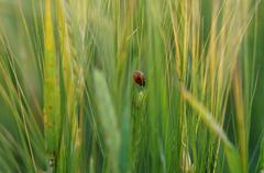 Ladybird on green grass Stock Photos