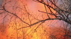 Flaming branch silhouetted against orange blaze Stock Footage