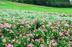 Beautiful flowerbed in city park - stock photo