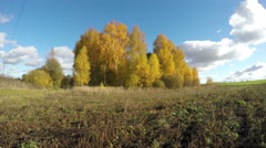 Yellow birch trees growing in fields on sunny day, time lapse 4K Stock Footage